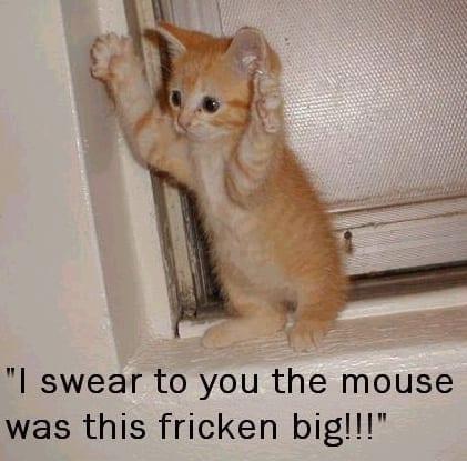 Scared e Cat